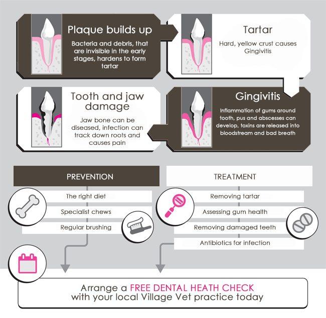 dental-health-chart-dog