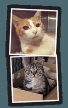 donate-blood-cat-01