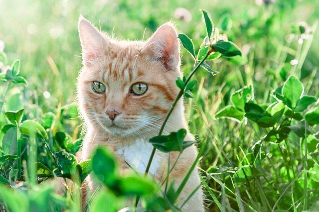 cat-summer