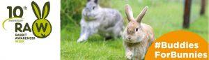 rabbit-awareness