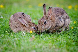 rabbits-eyesight