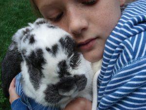 rabbit-hug