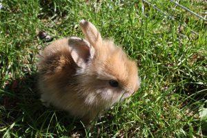 rabbit-sun
