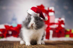 christmas-rabbit