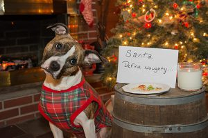 A Christmas dog with a holiday message.