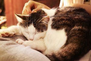 cat-lap