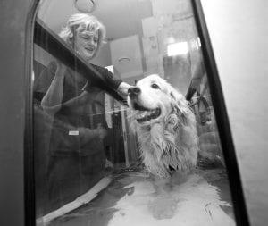 hydrotherapy-dogs-village-vet
